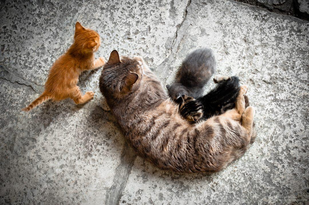 Chats des rues d'Istanbul