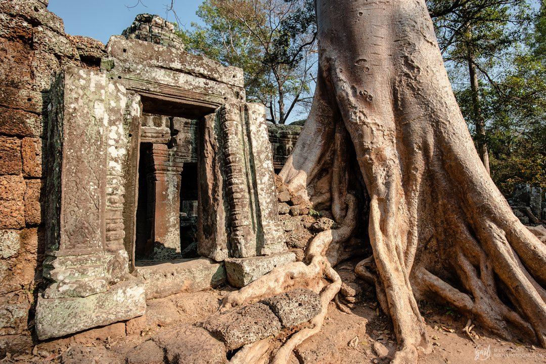 Le temple de Banteay Kdei sous les racines
