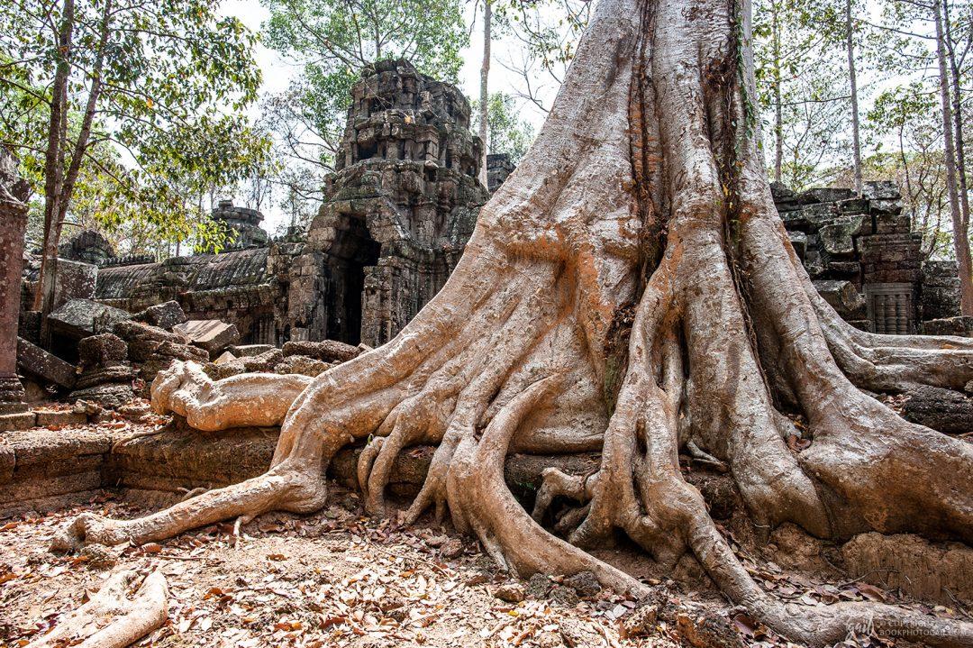 Le temple de Ta Nei sous les racines