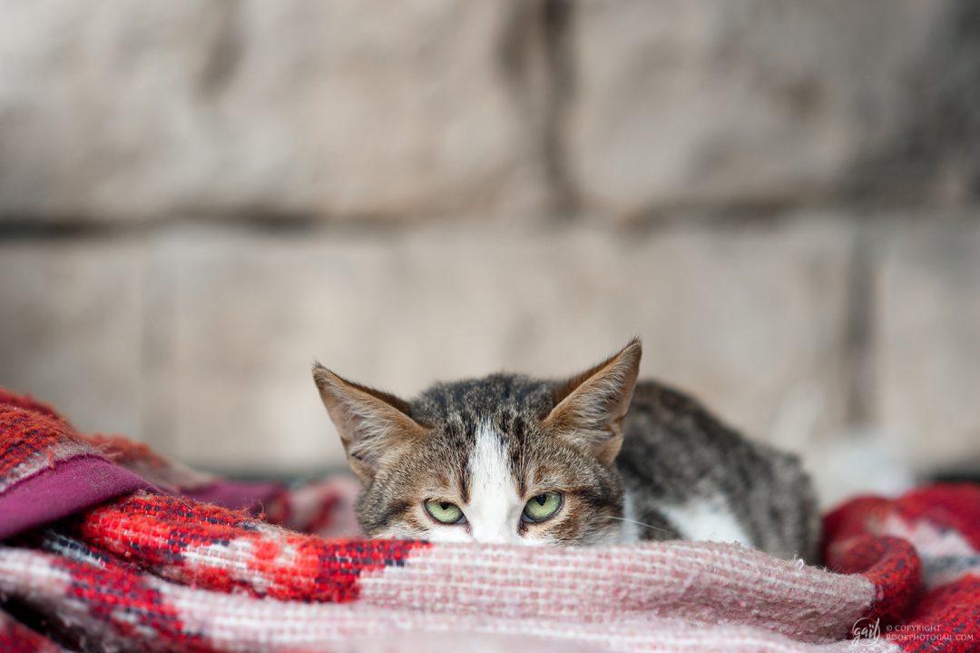 Chat mal luné à Jérusalem