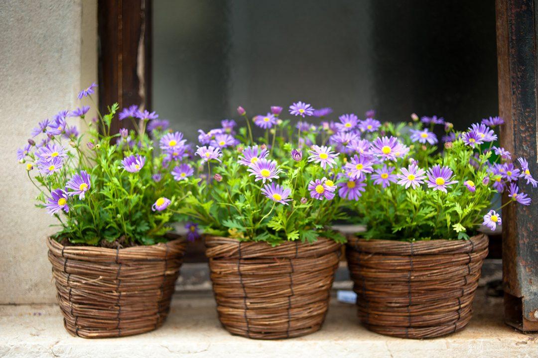 Fleurs sur un balcon de Venise