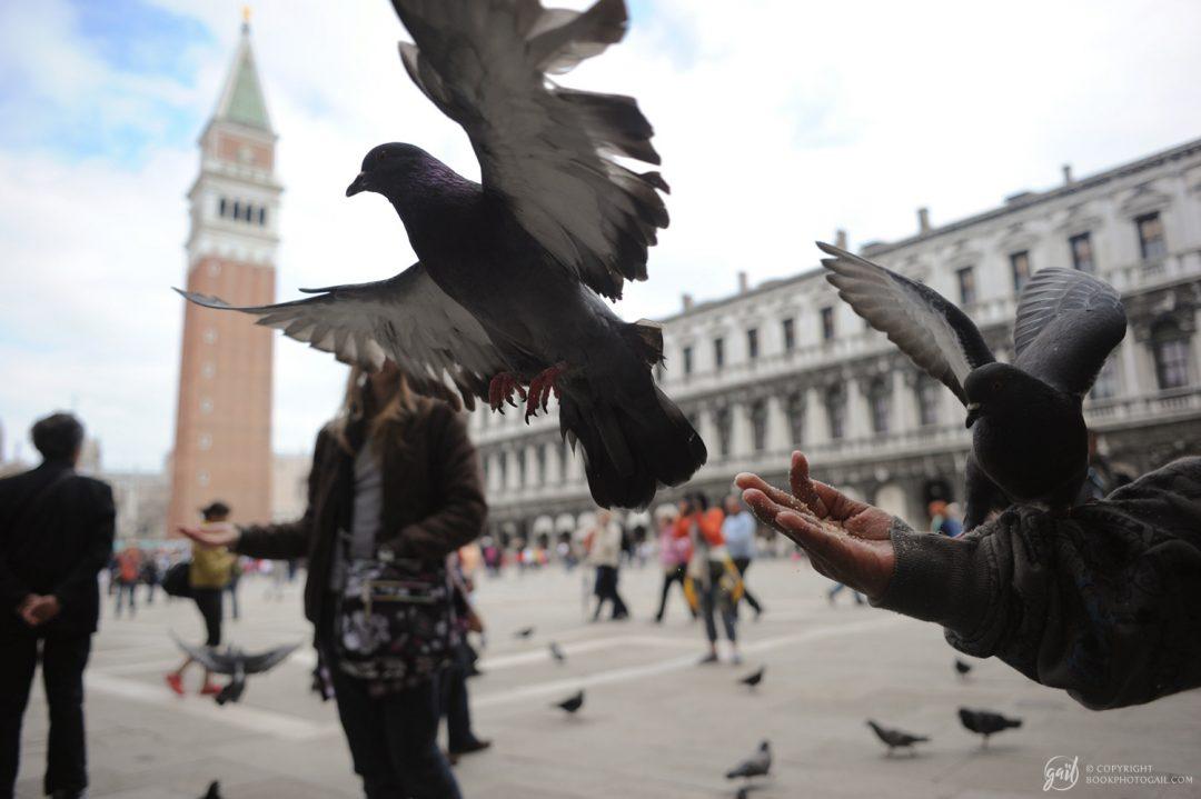 La Piazza San Marco de Venise