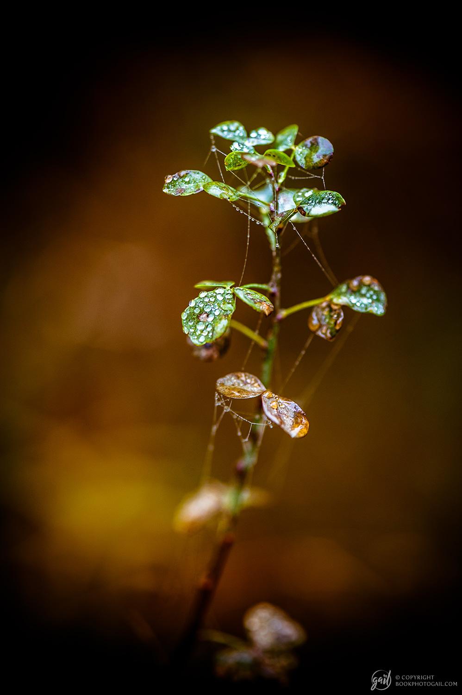 Photographie Nature aux couleurs d automne