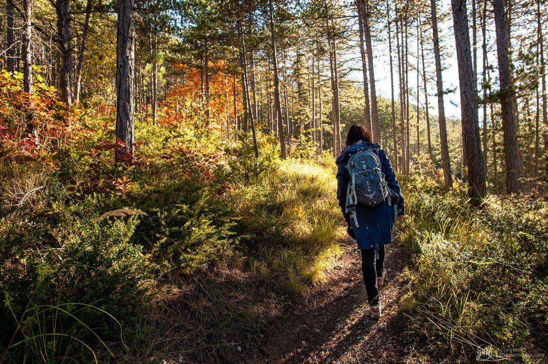 Randonnée d automne dans la forêt de Ponet-et-Saint-Auban