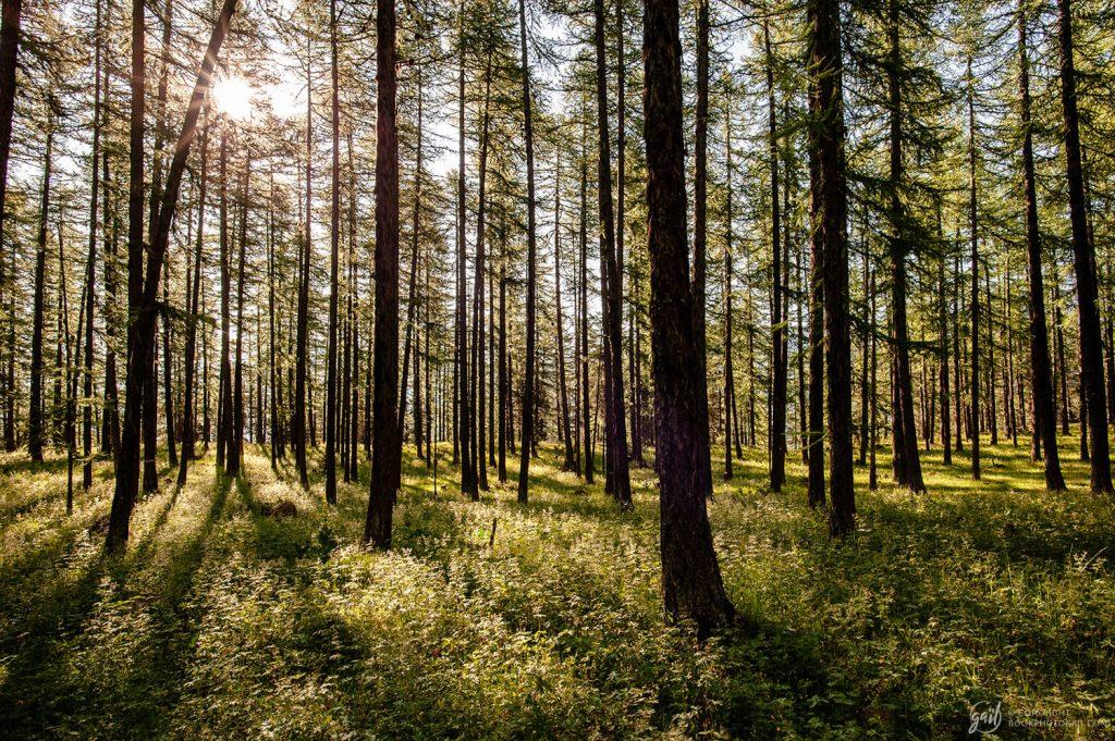 Forêt autour du lac de Roue